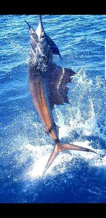 Los Suenos, Costa Rica: Jumping sailfish!