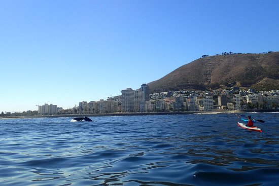 Waching Southern Right whales from a kayak off Sea Point Cape Town last week. Truly spectacular!