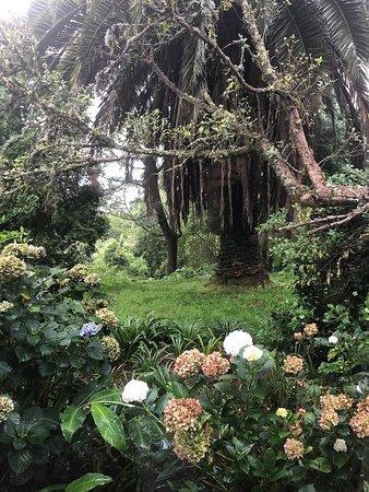 Scenic surrounding