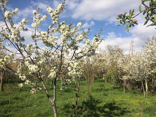 Kotayk Province, Armenia: Spring Vibes in our garden.