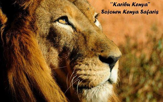 Sojourn Kenya Safaris