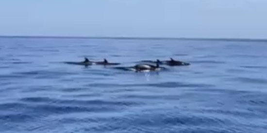 The Discovery Adventures ATV Guided Experience in La Fortuna, Arenal Volcano: A pod of dolphins by the side of our boat!