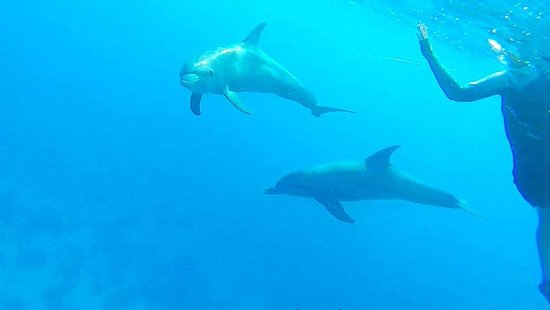 4 Hours Snorkeling With Dolphins Trip By A Private Speed Boat: Thank you 'Mariah private boat' for the best day in 2019