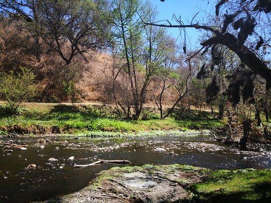 Parque Ecologico El Sabinal
