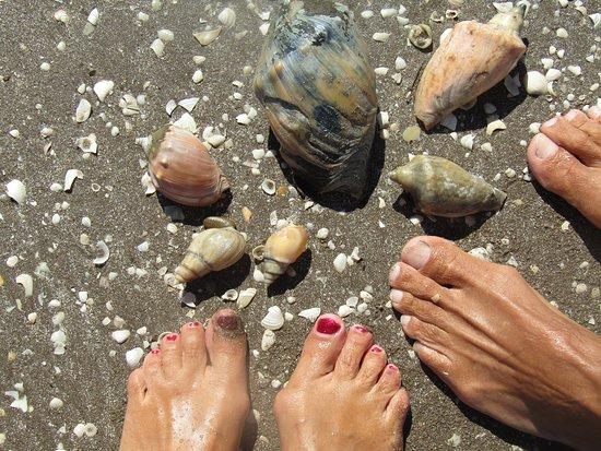 San Clemente del Tuyu, Argentina: CARACOLES DURANTE TODO EL CAMINO