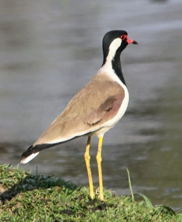 Keoladeo National Park (Bharatpur) - 2019 All You Need to