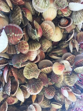 Islas de Gigantes, Philippines: A Bushel of Steamed Scallops quite affordable at PhP 100 for 100 pieces.