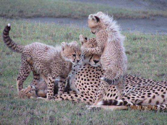 Borderless Tours and Safaris