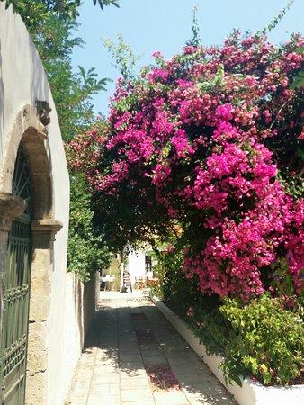 Assos, Grecia: ΑΣΣΟΣ