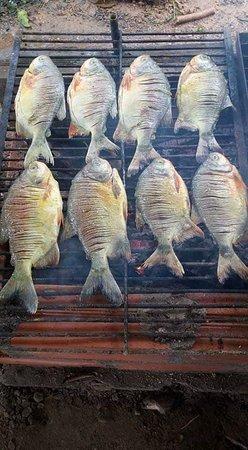 La Montanita, Колумбия: proceso de ahumado de el pez llamado cachama plato típico del departamento de caqueta