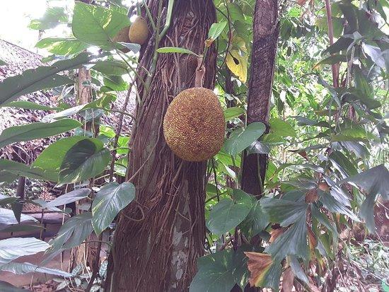 Luck Grove Spice Garden