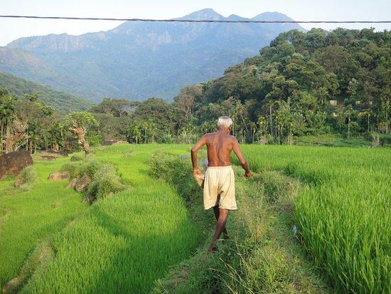 Meemure, Srí Lanka: paddy field around the village