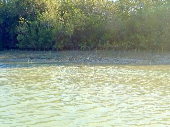 Chabahar, Iran: Mangrove forests are rich in wildlife