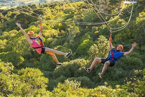 The Best of Waiheke: Ziplining, Wine...