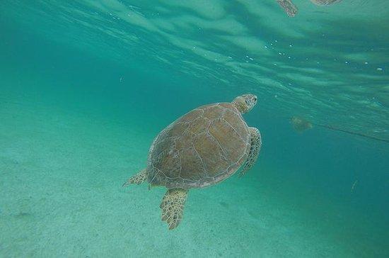 Private Tour: Akumal Marine Turtle...