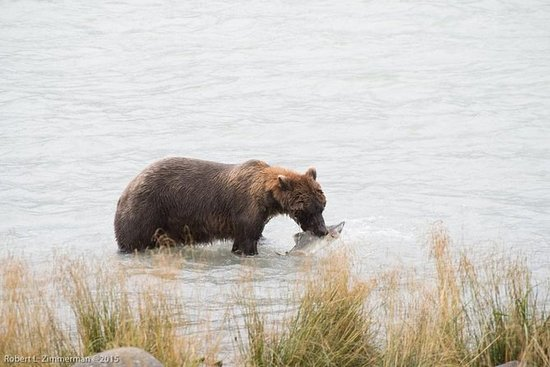 Chilkoot Wilderness and Wildlife...