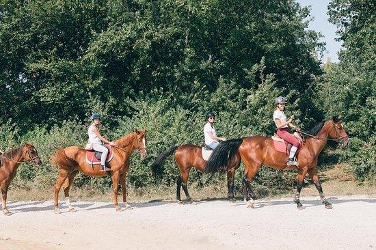 騎馬游覽佛羅倫薩的酒莊參觀