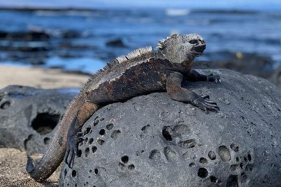6天加拉帕戈斯群岛经典 -  5个岛屿