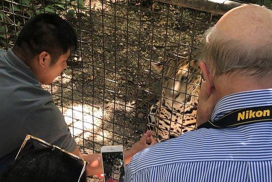The Belize Zoo with jaguar encounter