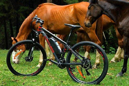 Horse Riding Experience in Limuru...