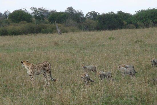 3 dager berømte Masai Mara Safari