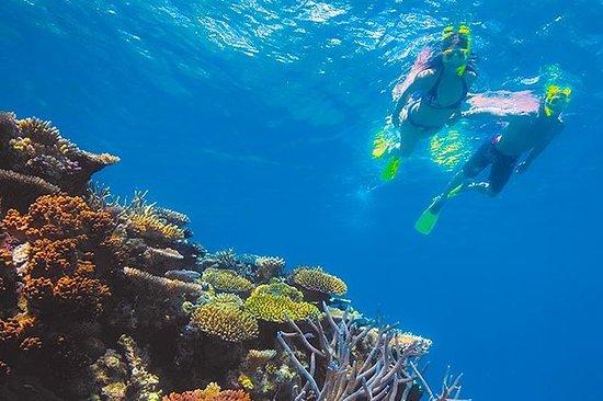 Excursão Snorkeling em Roatan