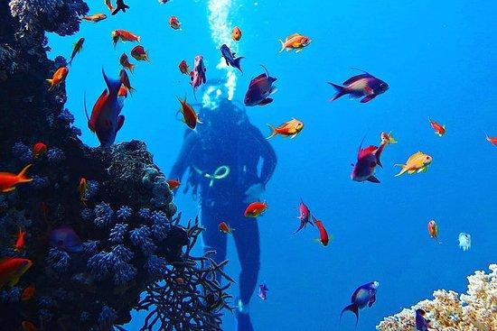 Budget Scuba Divers
