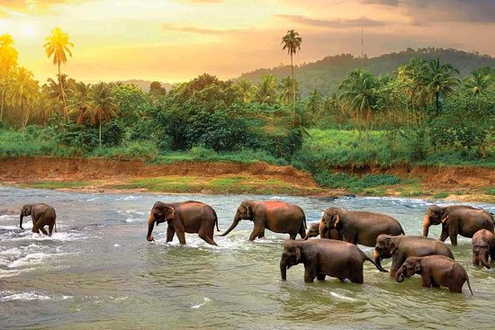 Private Kandy Day Tour from Negombo