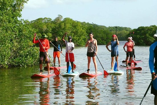 Family Paddle Board Tour - Excursion...