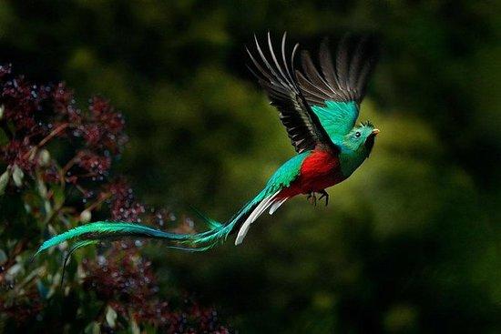 Quetzales y más tour de observación...