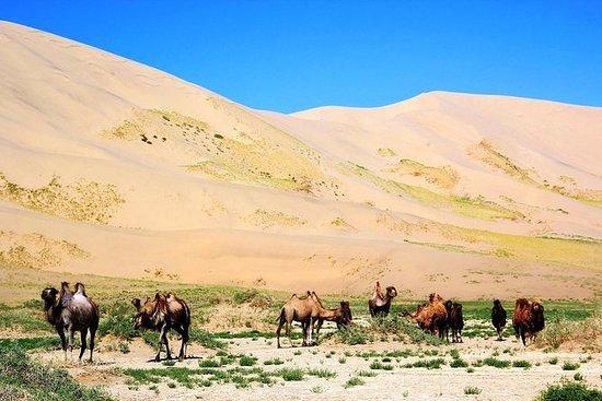 ゴビとモンゴル北部ツアー