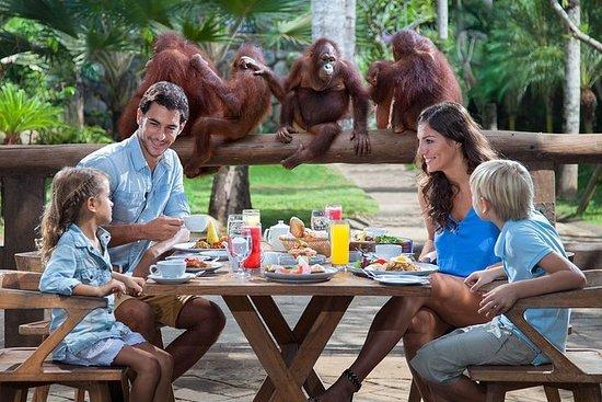 Bali frokost med Orang Utan