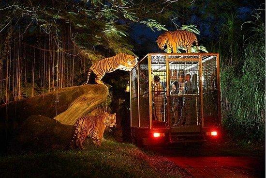 Bali Safari and Marine Park: Night...