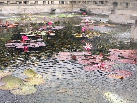 Western Lotus Pond Garden