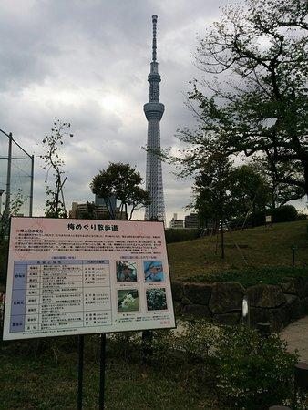 Taito Kuritsu Kojima Park