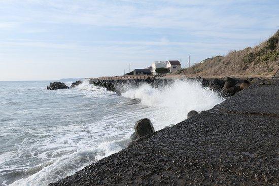 Taito Seaside Plant Community Land