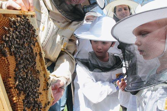 Mikolow, Poland: Kids & bees - Beekeeping workshops at Silesian Botanical Garden