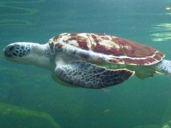 Rayong Aquarium: tortue en extérieur