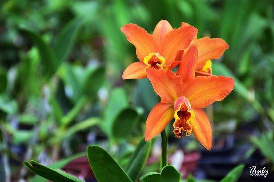 Fábrica de Orquídeas