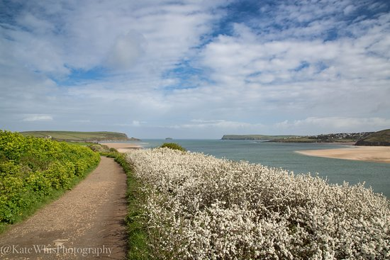 Path from Padstow to Tregirls beach, part of one of my Guided Photography Walks, taken in May with the blossom out and the Camel Estuary in the background.