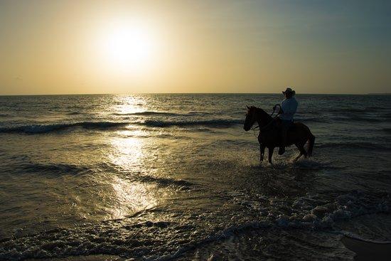 Horses Cartagena Tours