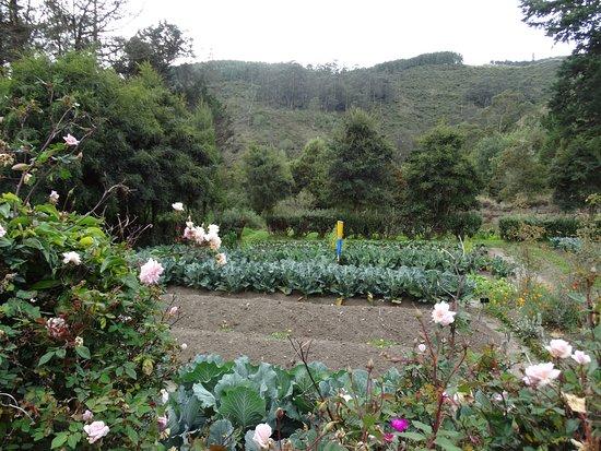 Imbabura Province, Ecuador: The organic garden