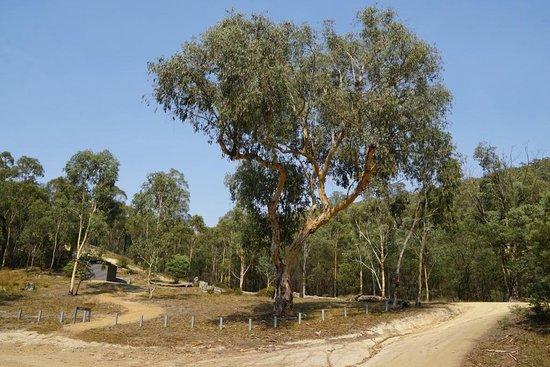 Brindabella National Park: Flea Creek Campground