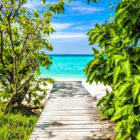 Heron Island, Australia: Hands up who wants to be here 🙋💙.
