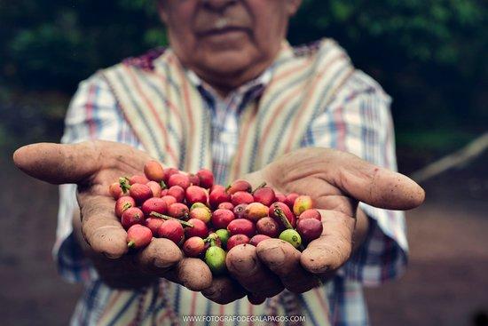 Bellavista, เอกวาดอร์: Organic Coffee by Adriano Cabrera