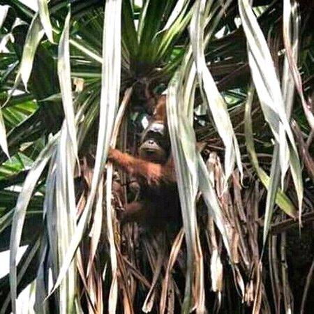 Gunung Leuser National Park, Indonesia: Join us and enjoy the vibes in the jungle . Orangutanjungletrekking.com