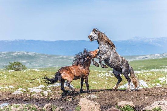 WILD HORSES PHOTO SAFARI