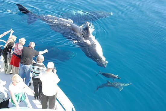 Excursion Observation des Baleines...