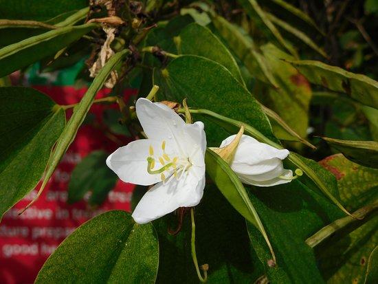 Adimaly, India: Plants