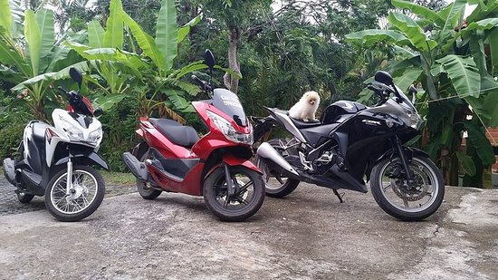 Idan Rent Motorbike & Car Rent